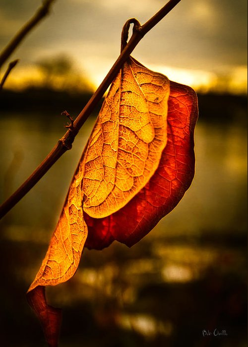 Leaf Greeting Card featuring the photograph The Leaf Across The River by Bob Orsillo