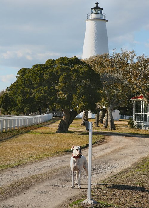 Dog Greeting Card featuring the photograph The Lighthouse Guardian by Steven Ainsworth