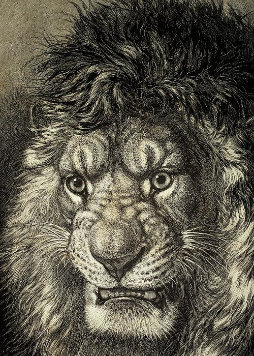 Growling Drawings Greeting Cards