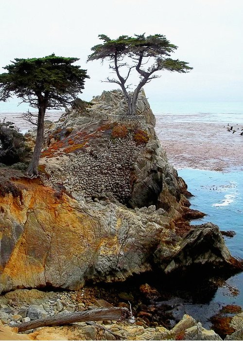 The Lone Cypress Greeting Card featuring the photograph The Lone Cypress - Pebble Beach by Glenn McCarthy Art and Photography