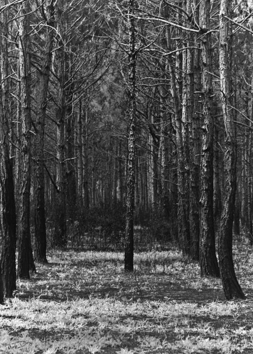 Woods Greeting Card featuring the photograph The Lonely Tree by Matt Day