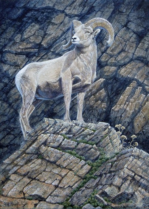 Ram Greeting Card featuring the painting The Look Out by Mike Stinnett