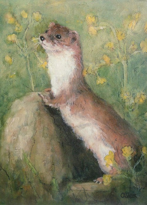 Weasel Greeting Cards