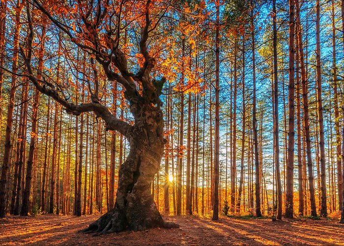 Belintash Greeting Card featuring the photograph The Lord Of The Trees by Evgeni Dinev
