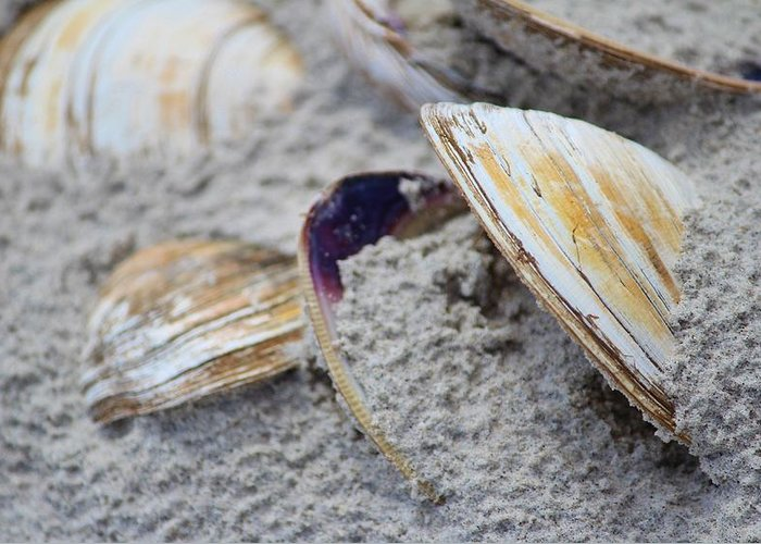Shell Greeting Card featuring the photograph Shells In The Sand by Cynthia Guinn