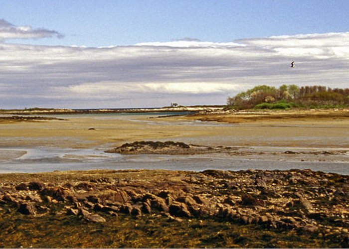 Scenic Tours Greeting Card featuring the photograph The Maine Coast by Skip Willits