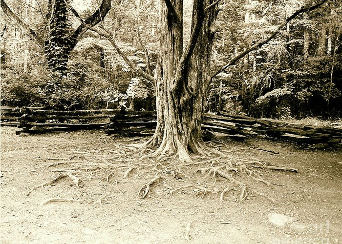 Tree Greeting Card featuring the photograph The Matriarch by Scott Pellegrin