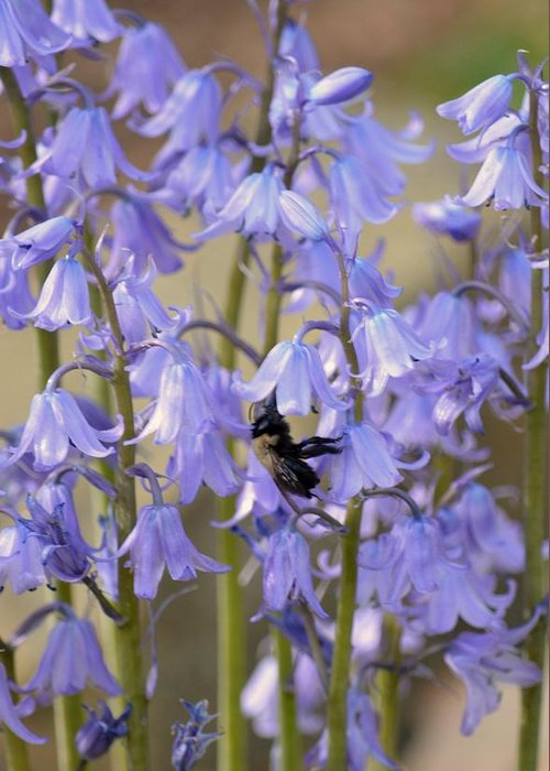 The Milky Bellflower Greeting Card featuring the photograph The Milky Bellflower by Maria Urso