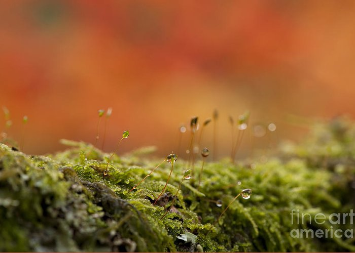 Abstract Greeting Card featuring the photograph The Miniature World Of Moss by Anne Gilbert