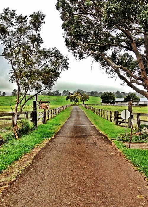 Maui Greeting Card featuring the photograph The Narrow Road by Julianne Baltrus