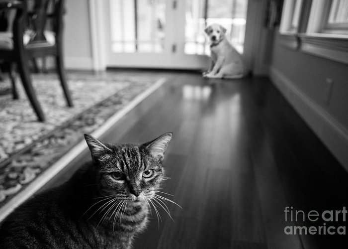 Cat Greeting Card featuring the photograph The Old Cat And The New Puppy by Diane Diederich