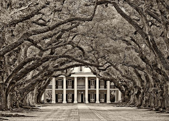 Oak Alley Plantation Greeting Card featuring the photograph The Old South Sepia by Steve Harrington