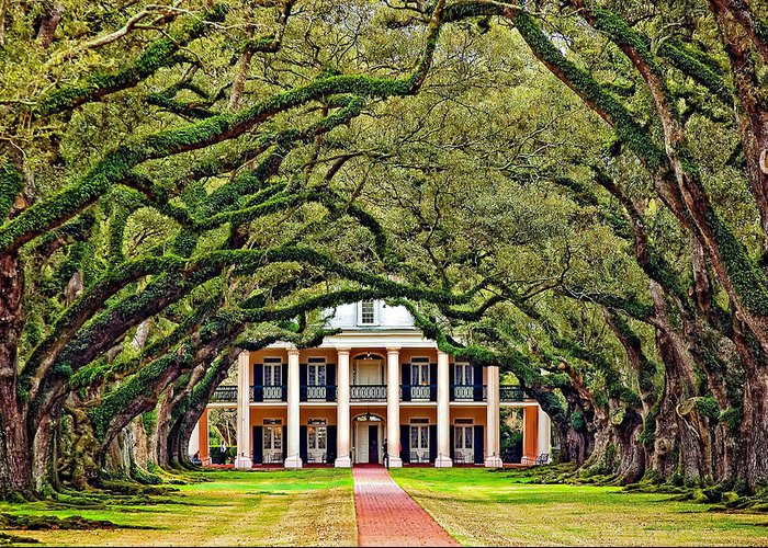 Oak Alley Plantation Greeting Card featuring the photograph The Old South by Steve Harrington