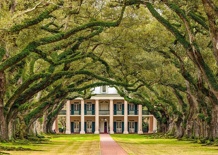 Oak Alley Plantation Greeting Card featuring the photograph The Old South Version 2 by Steve Harrington