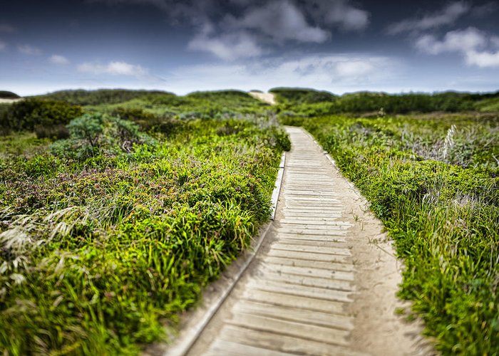 Beach Greeting Card featuring the photograph The Path by John Early