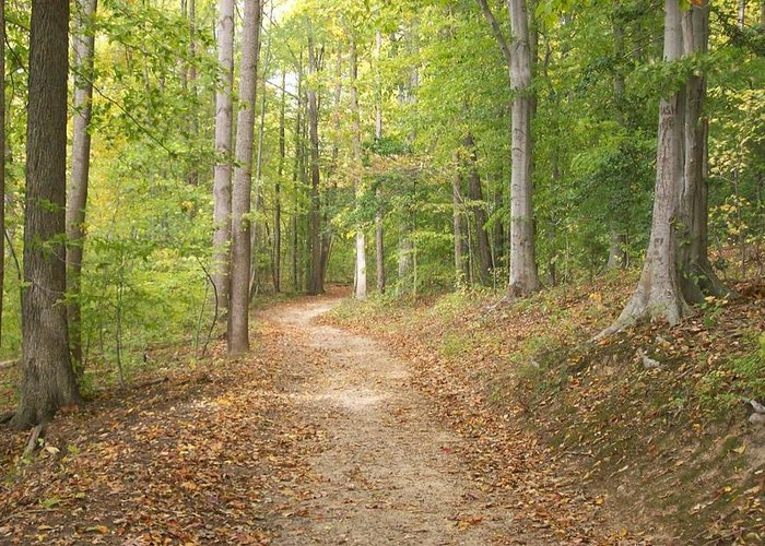 Park Greeting Card featuring the photograph The Path Less Traveled by Rosemary Armel