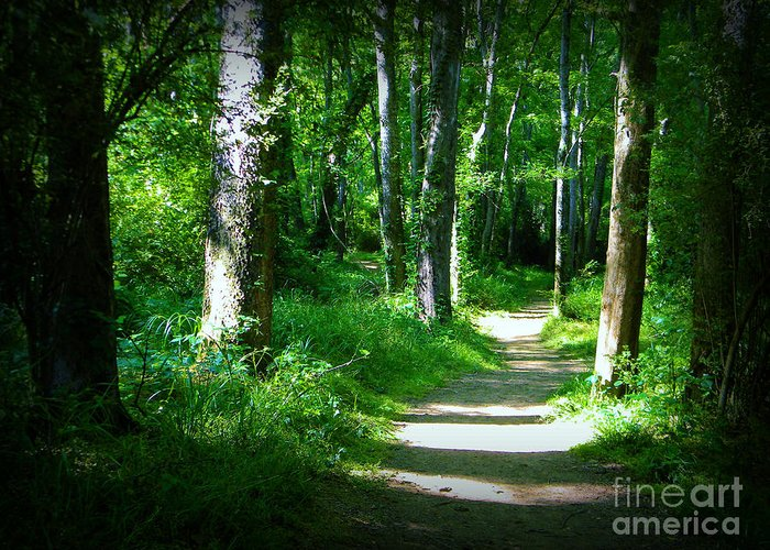 Greeting Card featuring the photograph The Path by Lorraine Heath