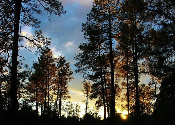 Sunset Trees Greeting Card featuring the photograph The Pines At Sunset by Michelle Cassella