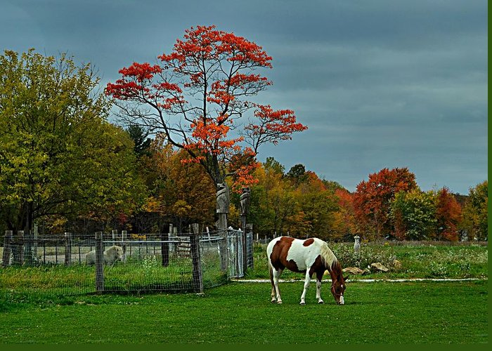 Fall Scenes Greeting Card featuring the photograph The Pinto by Julie Dant