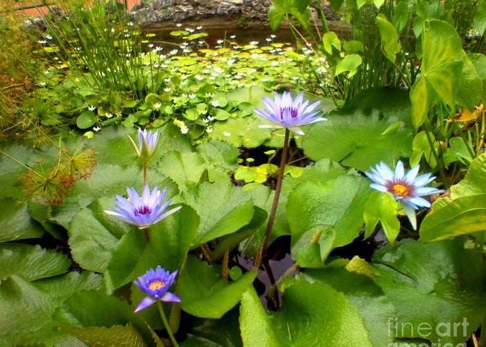 Nature Greeting Card featuring the photograph The Pretty Pond And Perfect Petals by Kandayia Ali