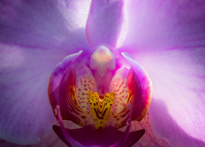 Purple Greeting Card featuring the photograph The Purple Orchid by David Patterson