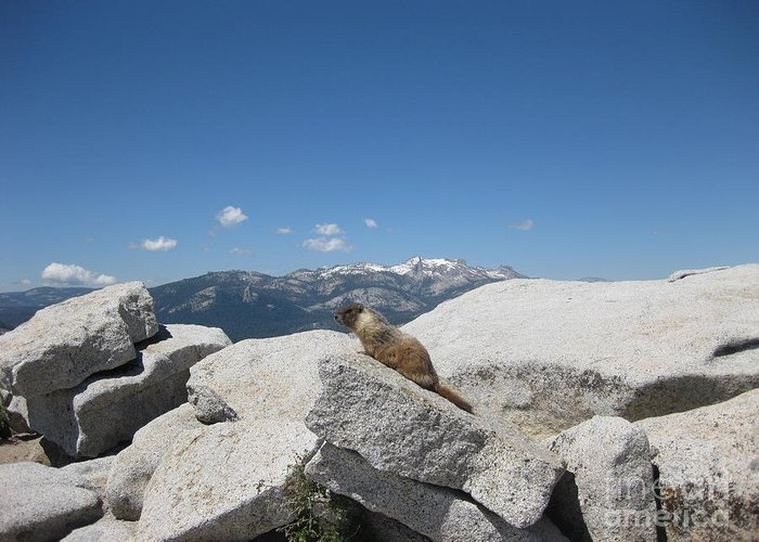 Half Dome Greeting Card featuring the photograph The Resident of Half Dome by AC Hamilton