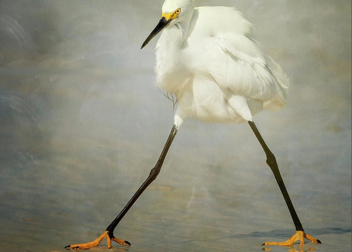 Bird Greeting Card featuring the photograph The Rock Star by Alfred Forns