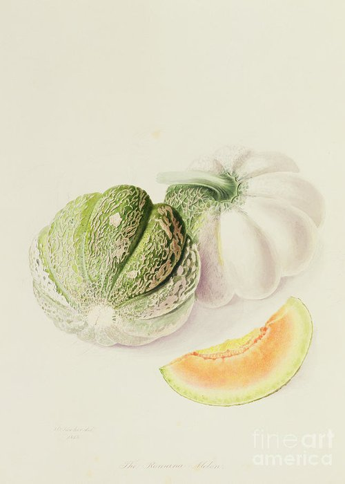 Fruit; Slice; Roman Melon; Botanical Illustration Greeting Card featuring the painting The Romana Melon by William Hooker