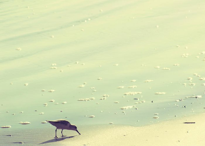 Beach Greeting Card featuring the photograph The Sandpiper by Amy Tyler