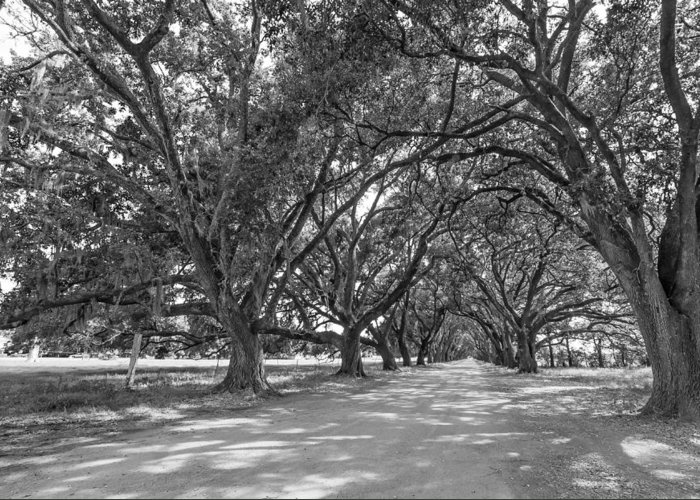 Evergreen Plantation Greeting Card featuring the photograph The Southern Way Bw by Steve Harrington
