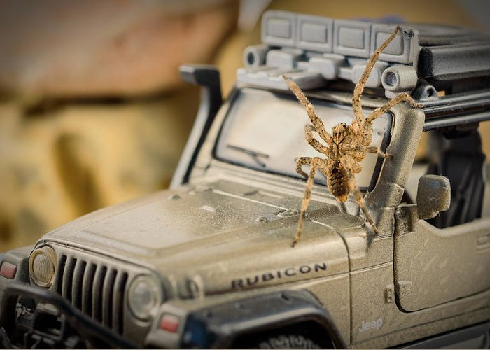 Spider Greeting Card featuring the photograph The Spider Series IIi by Marco Oliveira