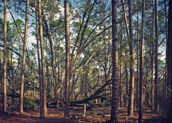 Chris Kusik Greeting Card featuring the photograph The Split Oak. by Chris Kusik