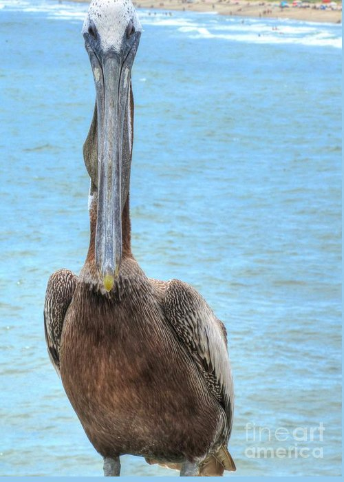Pelican Greeting Card featuring the photograph The Staredown by Jaclyn Hughes Fine Art