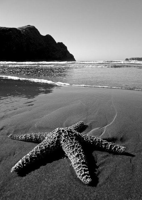 Starfish Greeting Card featuring the photograph The Starfish by Peter Tellone
