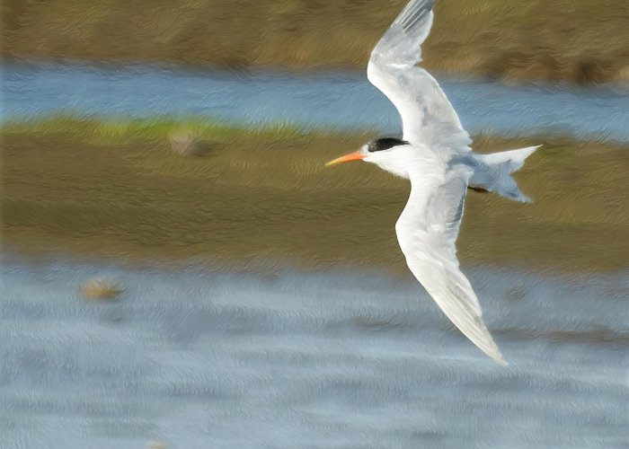 Tern Greeting Card featuring the photograph The Tern Sq by Ernie Echols