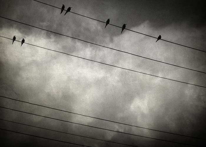 Bird Greeting Card featuring the photograph The Trace 11.24 by Taylan Apukovska