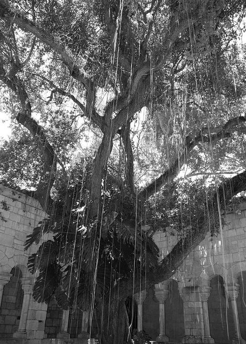 Black And White Greeting Card featuring the photograph The Tree Vines by Rob Hans