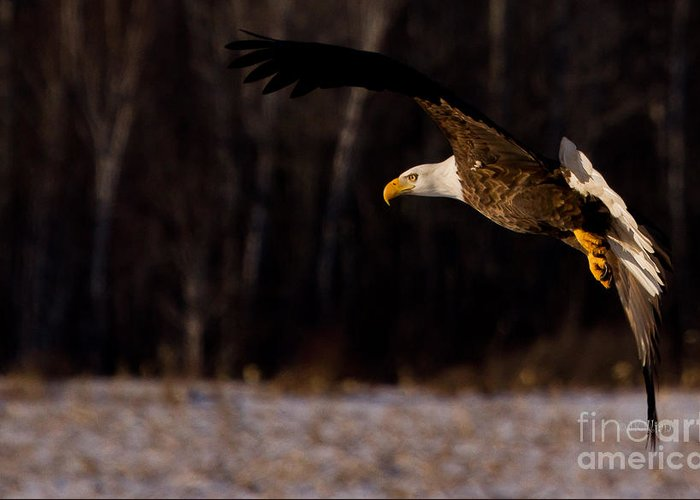Eagle Greeting Card featuring the photograph The Turn by Jan Killian
