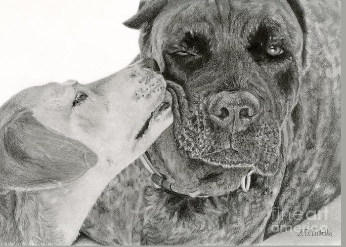 Hyper Realistic Drawings Greeting Cards