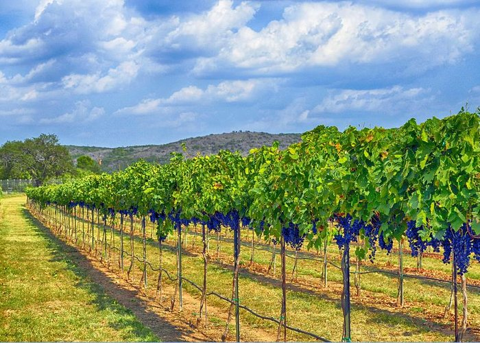 Wine Country Greeting Card featuring the photograph The Vineyard In Color by Kristina Deane