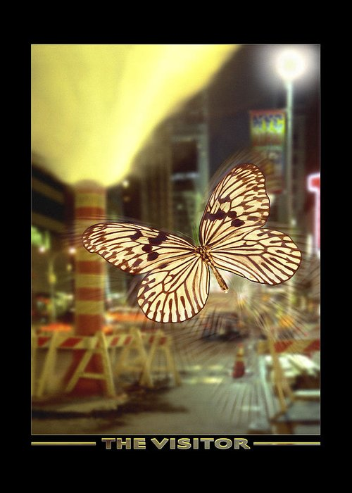 Butterfly Greeting Card featuring the photograph The Visitor by Mike McGlothlen