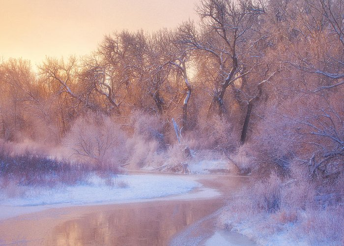 Ice Greeting Card featuring the photograph The Warmth Of Winter by Darren White