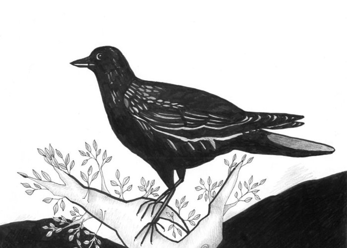 Bird Greeting Card featuring the drawing The Witness by Helena Tiainen