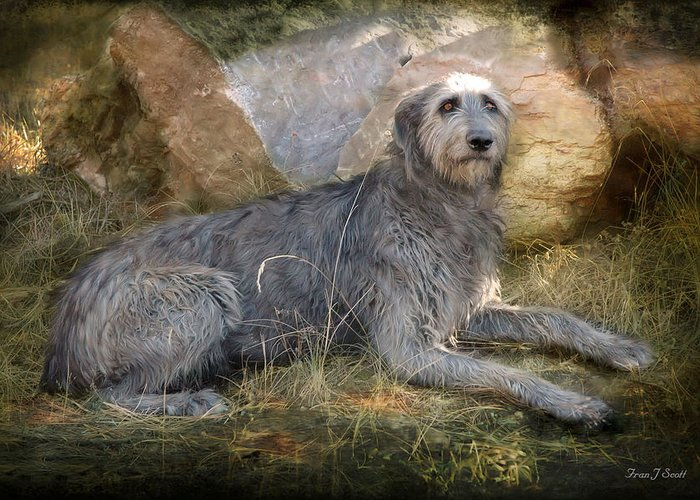 Dogs Greeting Card featuring the photograph The Wolfhound by Fran J Scott