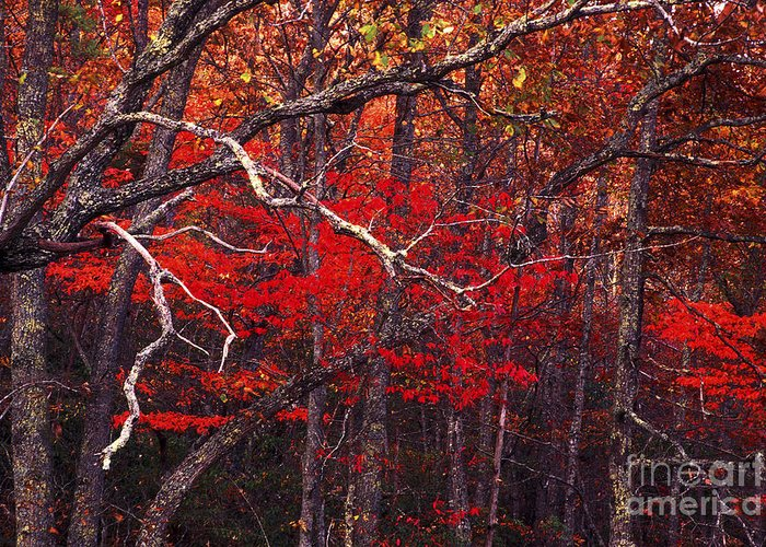 Woods Greeting Card featuring the photograph The Woods Aflame In Red by Paul W Faust - Impressions of Light