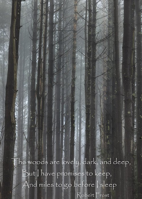 The Woods Greeting Card featuring the photograph The Woods by Bill Wakeley