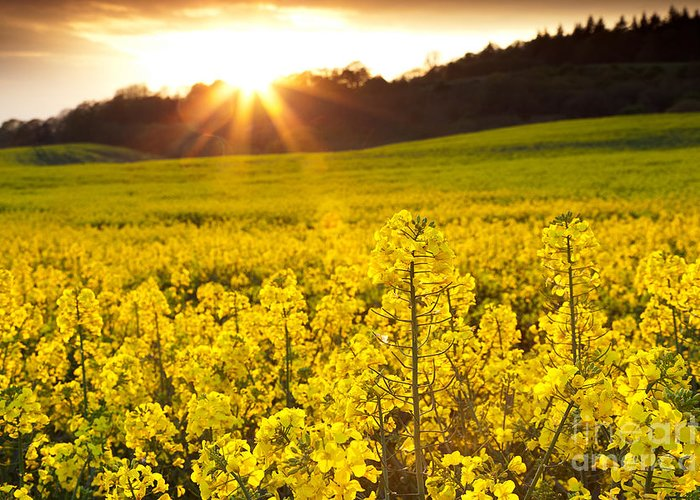 Yellow Greeting Card featuring the photograph The Yellow Rapeseed Field Beautiful by Boon Mee
