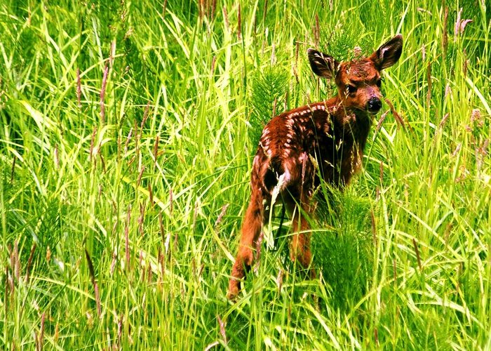 Deer Greeting Card featuring the photograph The Young Prince by Benjamin Yeager