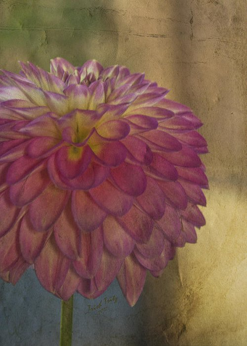 Flower Greeting Card featuring the photograph There's Always Next Year by Trish Tritz