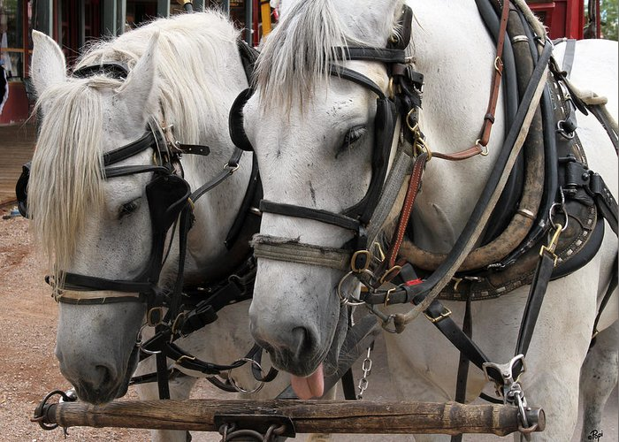 Horses Greeting Card featuring the photograph This Job Sucks by Paul Anderson